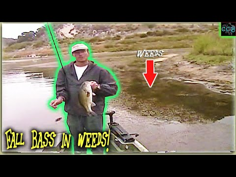 Catch More BIG FALL BASS In WEEDY LAKES (bass Fishing Tips)!!!!