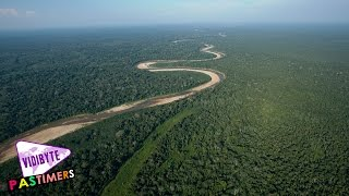 Top Ten Largest Forests Around the World || Pastimers