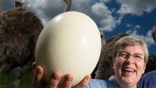 إنشاء أنيسيان هائلة من البيض ، الجزء 1 / كيفية إنشاء أنيسيان ، ص.1