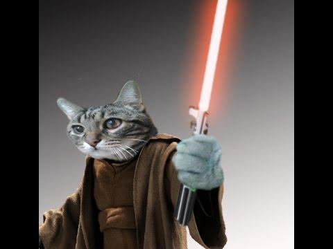 gato jedi espada laser , sable de luz parodia star wars