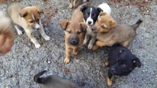 Бездомные милые щенята