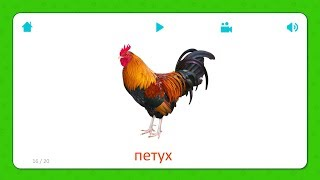 Петух - Карточки Для Детей - Домашние Животные - Карточки Домана