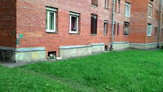 Санкт-Петербург Пушкин коты