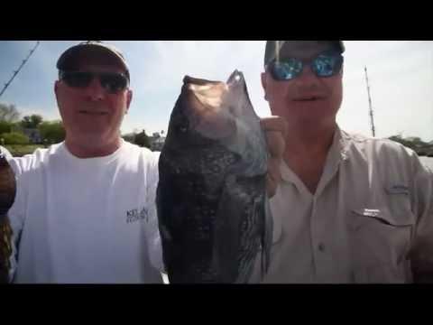 Black Sea Bass in the Delaware Bay