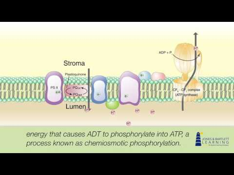 Photosynthesis Animation for Botany: An Introduction to Plant Biology | Jones & Bartlett Learning
