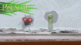 Minuscule - A Christmas Apple / La Pomme de Noël (Season 2)