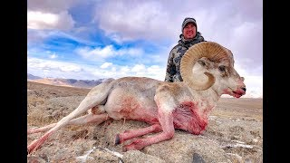 Marco Polo sheep & Ibex hunting  Kyrgyzstan 2018