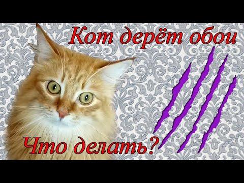 Кот Пиля дерёт обои. Лучшая когтеточка для кошек.