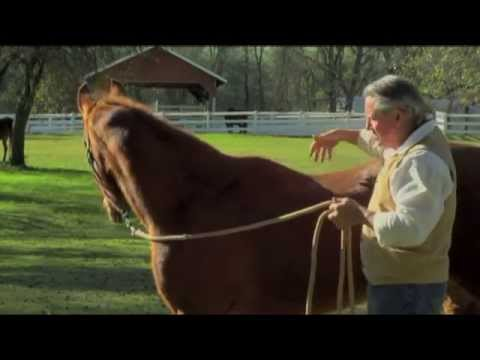 Melding With Equus DVD: Stomach Ulcers