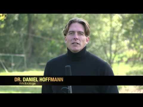 Schliefenanlagen sind tierschutzgerecht / Der Deutsche Jagdverband veröffentlicht zweites Video zur Hundeausbildung am lebenden Tier