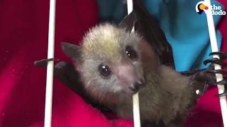 Baby Bats Love To Snuggle | The Dodo