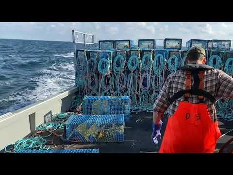 Dumping Day 2019- Lobster Fishing In Nova Scotia
