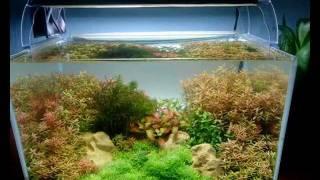 видео Где заказать аквариум под ключ в Киеве