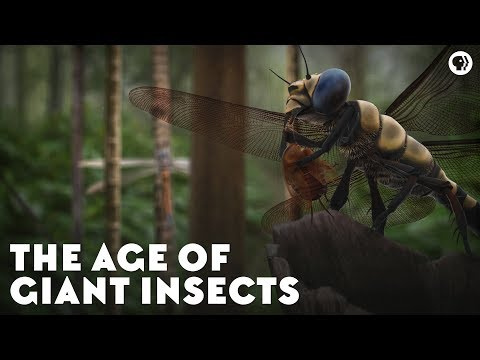 The Age of Giant Insects