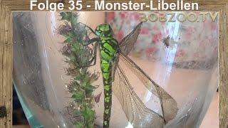 Folge 35  - Monster - Libellen und Baby - Siebenschläfer !
