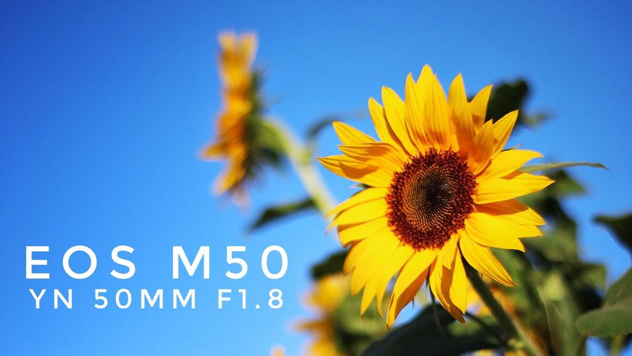 Review Canon Eos M50 Yongnuo 50mm F18 Adapter Youtube Lensa Fix Yn50mm For Nikon Reviewkamera Canoneosm50 Yongnuo50mm