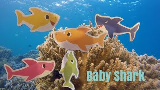 Learn Colors with Baby Shark! Baby Shark Song. #learncolors #babyshark #forkids
