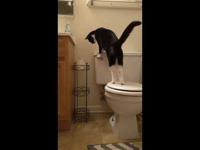 Crazy Flushes Toilet