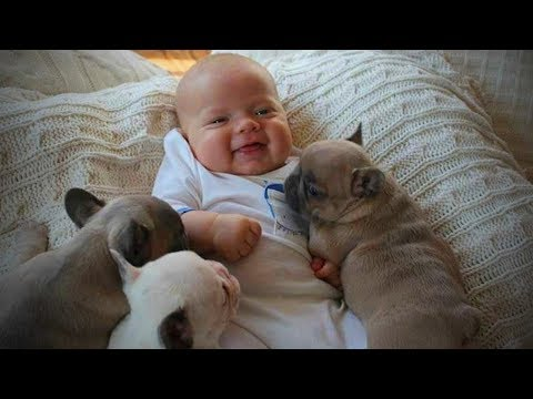 Dogs Babysitting Babies 👶🐶 Dogs Love Babies (Full) [Funny Pets]