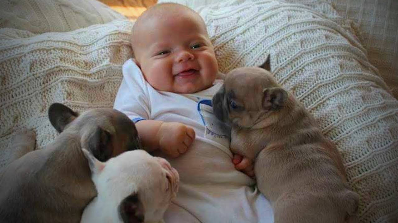dogs babysitting babies dogs love babies full funny pets