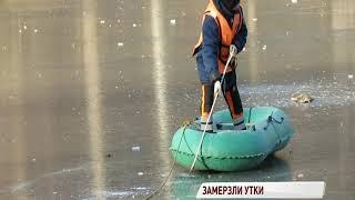 В Ярославле появились первые жертвы холодов: погибли утки в парке «Нефтяник»