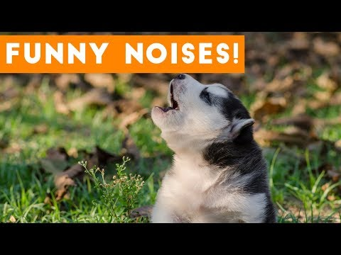 Funniest Funny Animal Sounds Compilation of 2017 | Funny Pet Videos