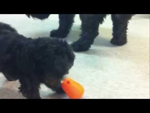 DogPyramid & Nina Ottosson´s dogs