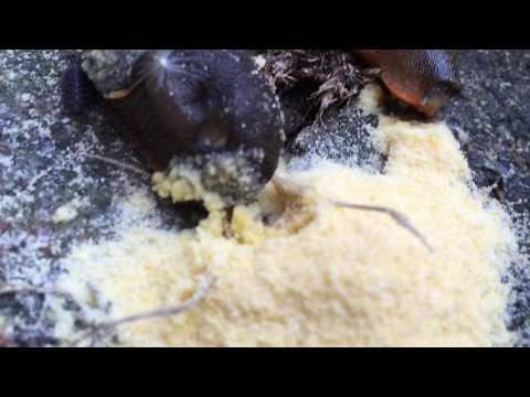 how to kill snails canfis
