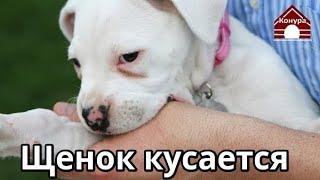 Как отучить щенка кусаться, как играть с щенком
