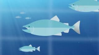 Havet gir mat til en voksende befolkning