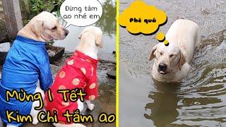 Thảm họa mùng 1 Tết - Dở khóc dở cười xem Kim Chi tắm ao