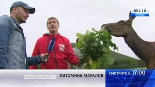 «Вести: Приморье»: Уникальное предложение для экотуризма в Приморье