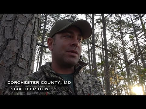 Dorchester County Maryland Sika Hunt