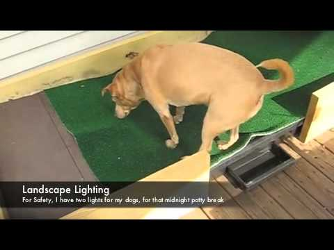 Attirant DIY Dog Potty