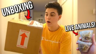 Unboxing LIVE ANIMALS From ONLINE ANIMAL PET STORE!! (+ FEEDING)
