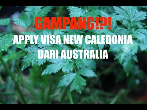 CARA APPLY VISA NEW CALEDONIA DARI AUSTRALIA (Video Mic Audio with Canon 80D)