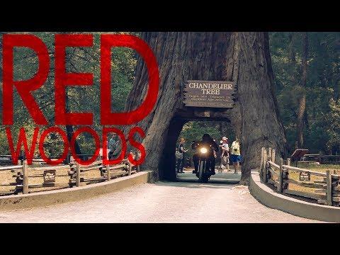 Riding the Redwoods - Detour 11