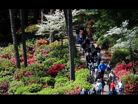 Natural Beauty of Augusta National