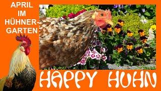 Happy Huhn Folge 79: April im Hühnergarten - Gehege für Glucke bauen - Ungiftige Gehölze für Hühner