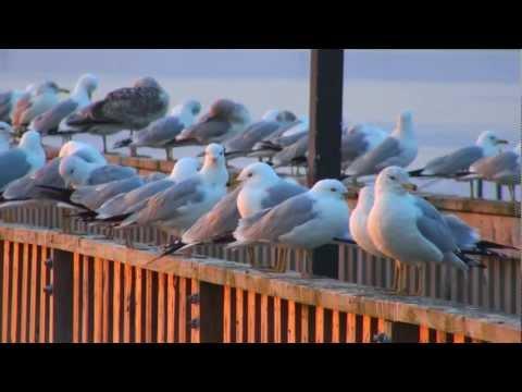 Sunrise Over River Port  2/27/2011