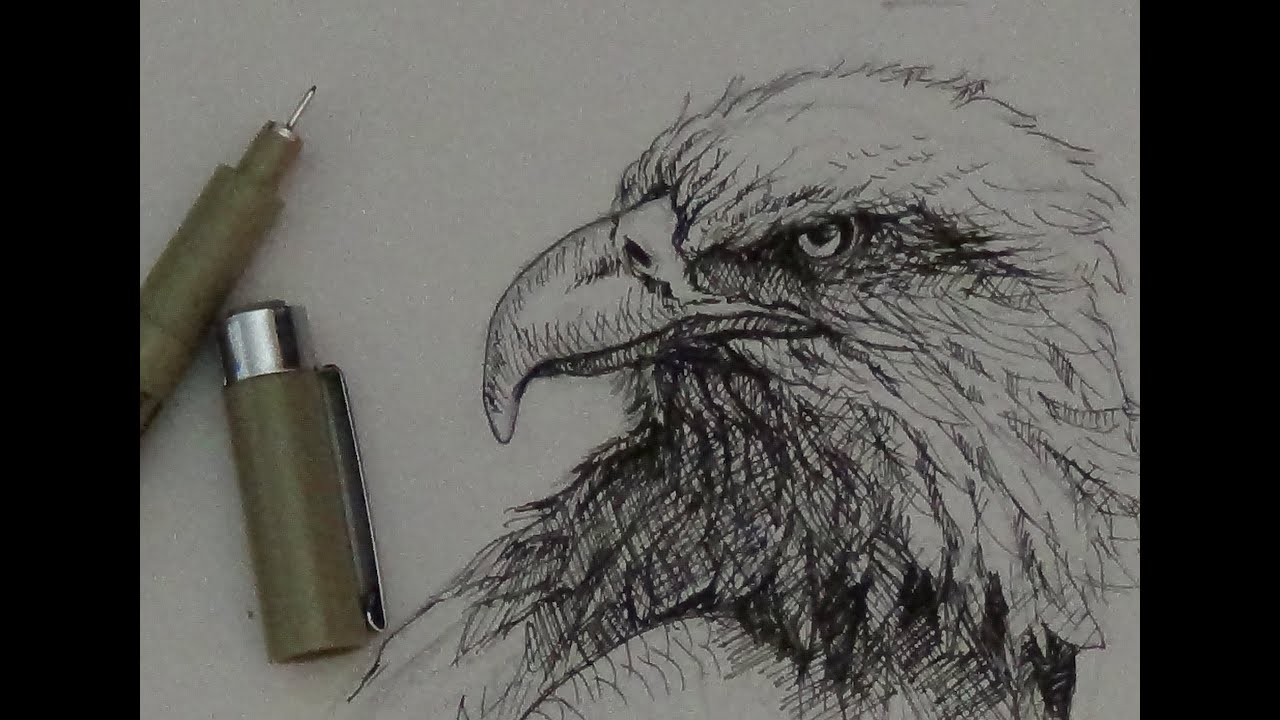 Uncategorized Eagle Drawings pen ink tutorial how to draw an eagle head youtube