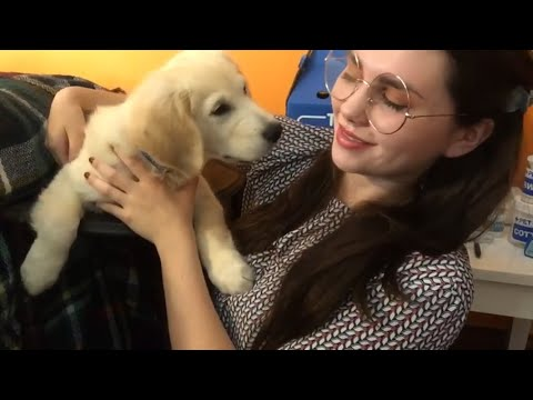 ASMR Vet Check Up | Measurements/Writing/Typing Sounds 🐕♥️