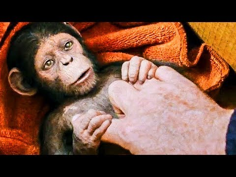 "Thumbnail: ""Human Get Sick, Ape Get Smart"" Trailer - The Planet Of The Apes 3 (2017)"