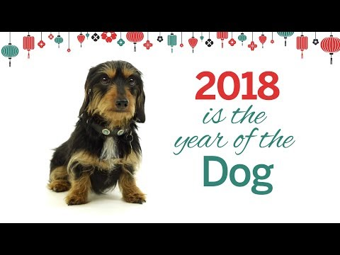 Chinese New Year: The Year of the Dog