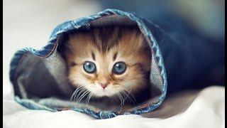 Няшная подборка № 3 Самые милые животные в мире !