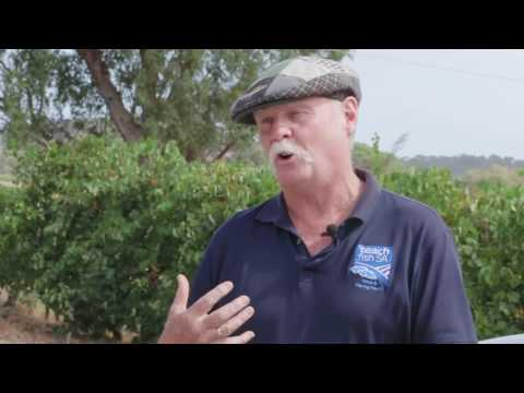 Teach Fish SA, a Tour Operator in Adelaide for Fishing Tours and Wine Tours!