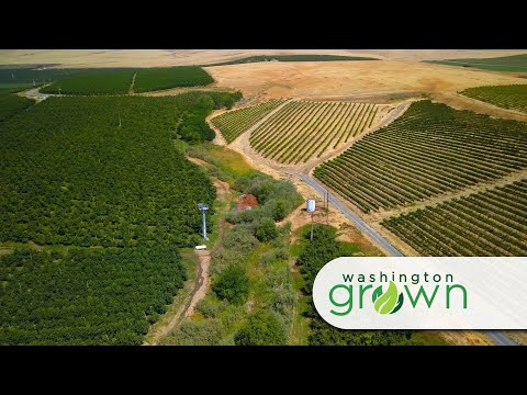 Washington Grown Season 7 Episode 7