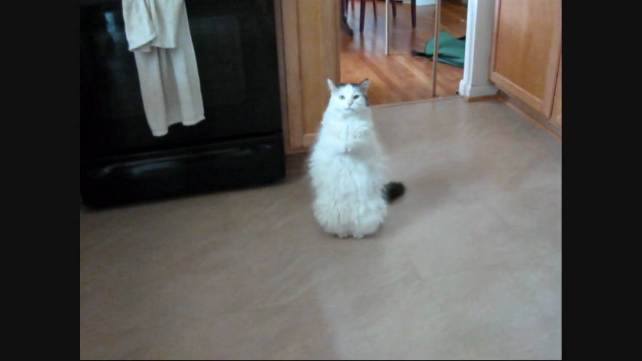 Peewee the Cat Saying 'Please' - YouTube