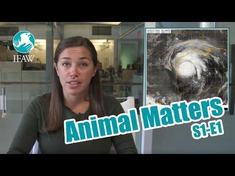 IFAW's Animal Matters - September 1st, 2017 (S1-E1)