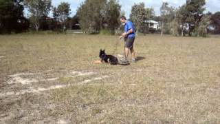Dog Tracking - Foundation Of The Track